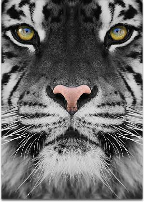 """Several people, the article claimed, reported having seen a """"gray tiger"""" creature"""