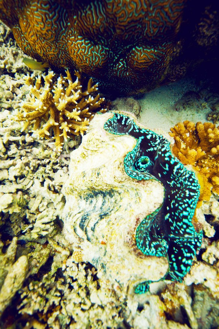 Snorkel with beautiful marine creatures on the world famous Great Barrier Reef, Australia.