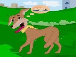 Jacky Jackal soon to be the blue jackal - Animal stories for kids