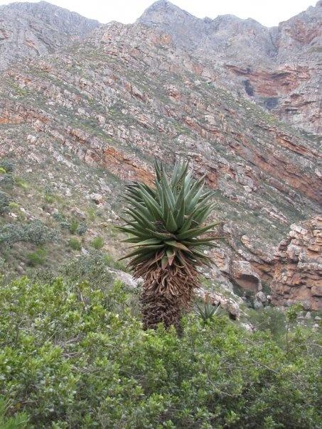 Seweweekspoort, Klein Karoo, South Africa
