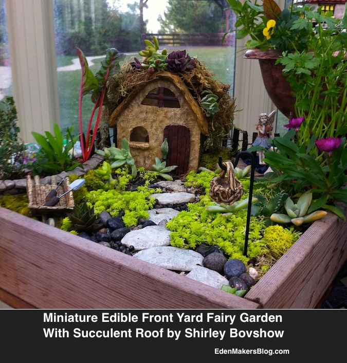 edible miniature fairy garden with succulent roof by shirley bovshow via edenmakersblogcom maybe