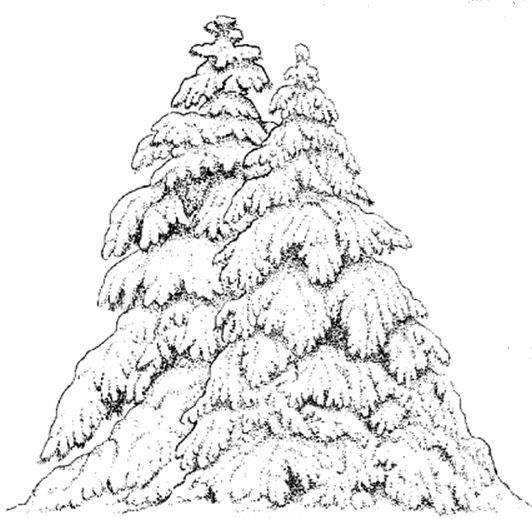 how to draw a winter tree