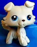 Image result for lps collie