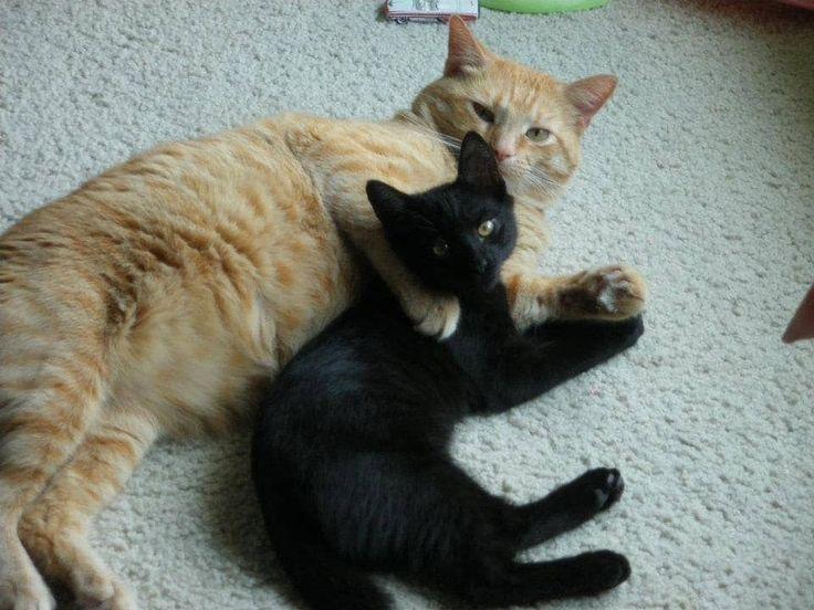 Gato anaranjado rechazado aparece en la puerta de una familia pidiendo que lo dejen entrar, y casi una década después...