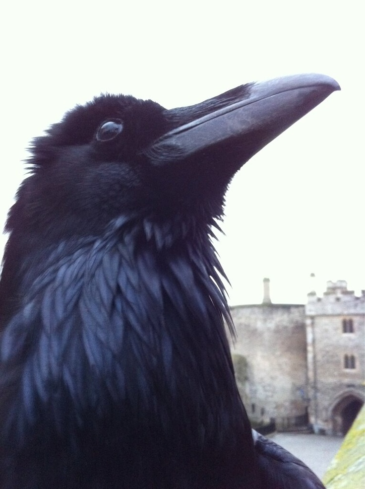 raven chat line Crawley, quest chat line North Devon, raven chat line Vale of White Horse,