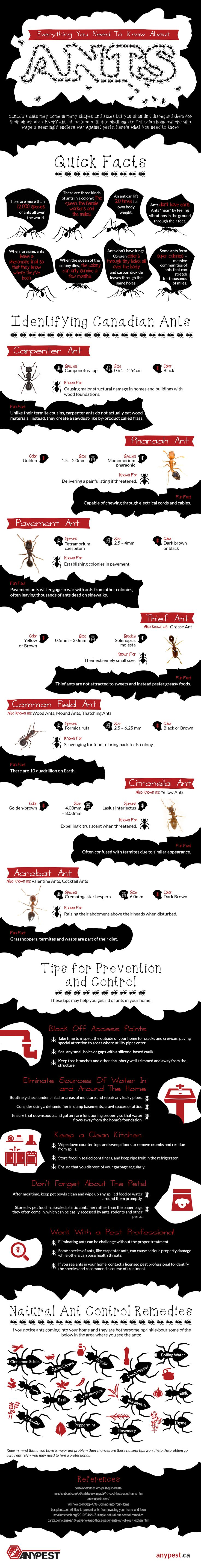 Everything You Need To Know About Ants #Infographic #Insects #Ants