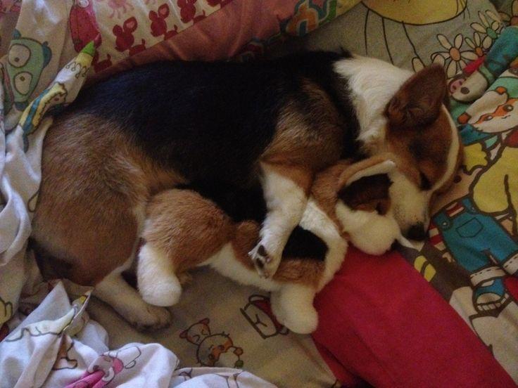 Cuddling with mini me