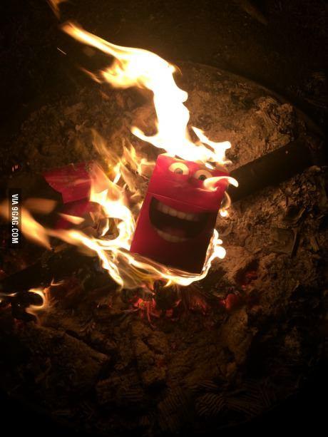 Bonfire, Funny Memes, Funny Animal