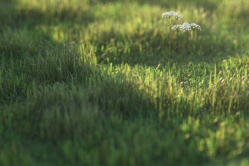 cam02_longgrass0000 by Peter Guthrie, via Flickr