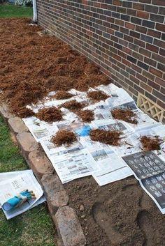 Настелите газеты в 3-4 слоя, закройте мульчей сверху. Газеты предотвращают прорастание сорняков и в отличие от ткани полностью разлагаются через 18 месяцев. За это время все семена сорных растений, находящихся в земле, погибнут. Газеты на грядке – это экологично, дешево и, если вдруг вы захотите сделать редизайн грядки, у вас не будет головной боли, […]
