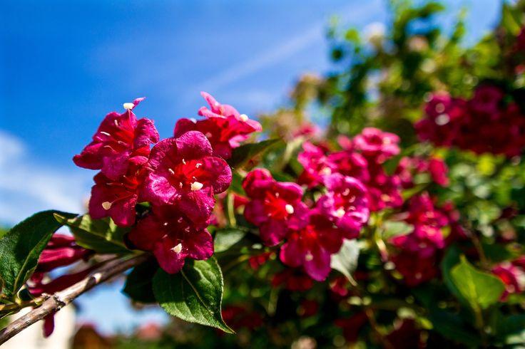 https://flic.kr/p/tseUxU | Májusi virágok