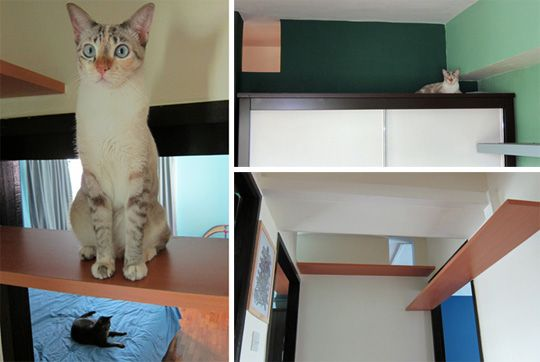 Custom Cat Shelves in Singapore