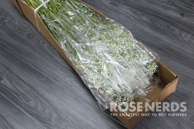 Wholesale Baby's Breath (Gypsophila) is the all-time classic filler flower that is now a popular single-variety bridal bouquets and wedding flower arrangements for the rustic chic. Wholesale Baby's Br