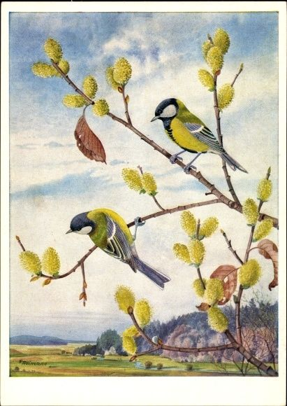 Künstler Ansichtskarte / Postkarte Reimann, Friedrich, Meisen mit blühender Salweide