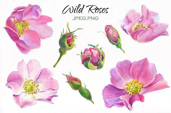 Aroma of Wild Roses. Watercolor set. by LIUBOVYA on @creativemarket