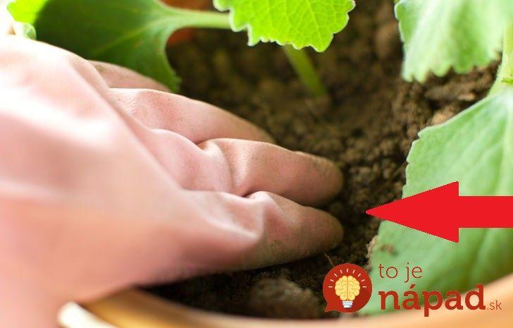 Kedy je potrebné presadiť izbové rastliny? Napovie vám 6 znakov!