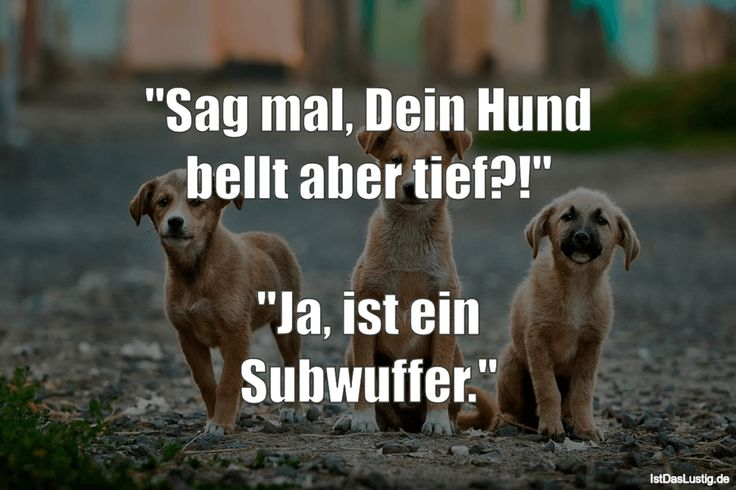 """""""Sag mal, Dein Hund bellt aber tief?!""""  """"Ja, ist ein Subwuffer."""" #lustig #sprüc…"""