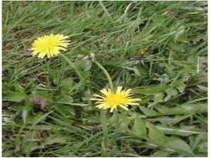 Homemade Weed Killer If you want to get away from commercial weed sprays for health reasons or to save a little money there are a few options available to you. 1.) Boiling Water: This is a great wa...