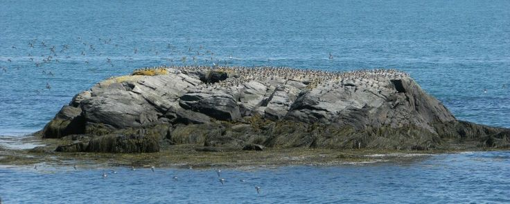 Cape Forchu Yarmouth NS  Taken on 08/16/14