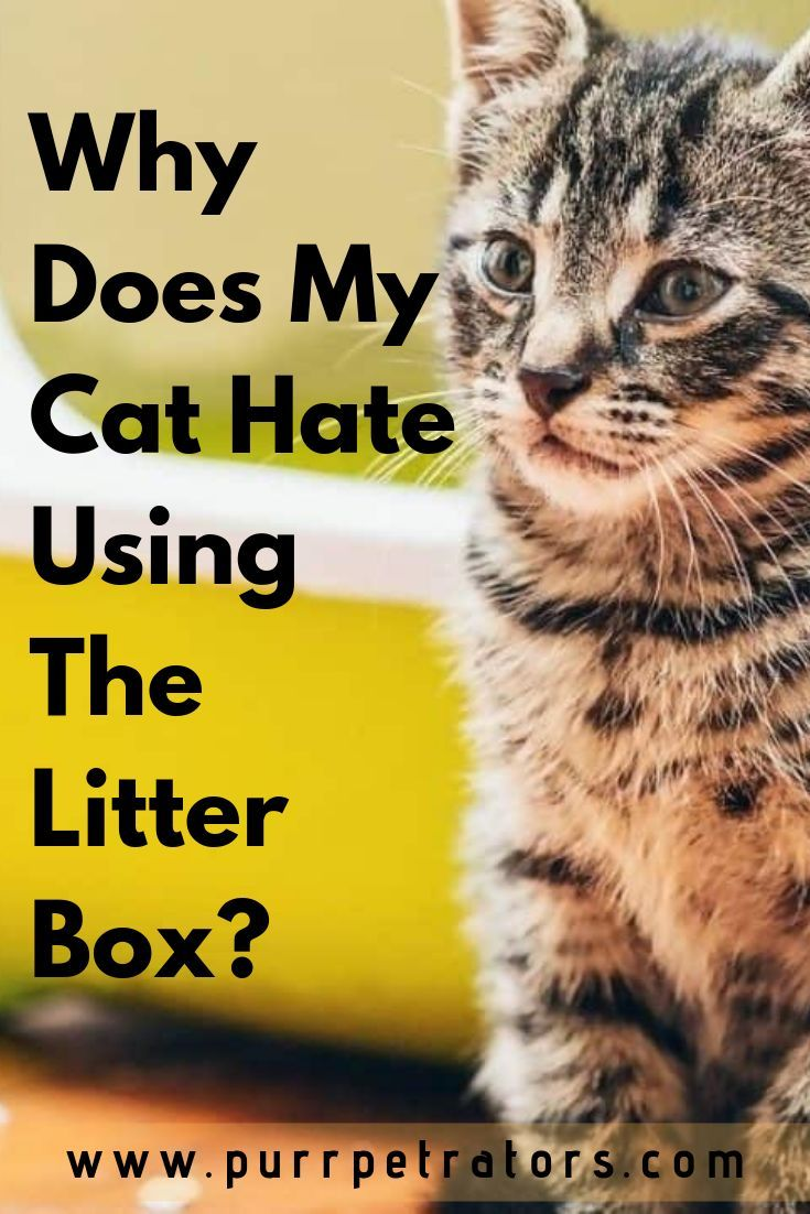 Most Cats Have An Easy Time Using Their Litter Box A Good Bunch Of The Younger Ones Also Enjoys Taking Bathr Litter Box Natural Pet Care Cat Behavior Problems