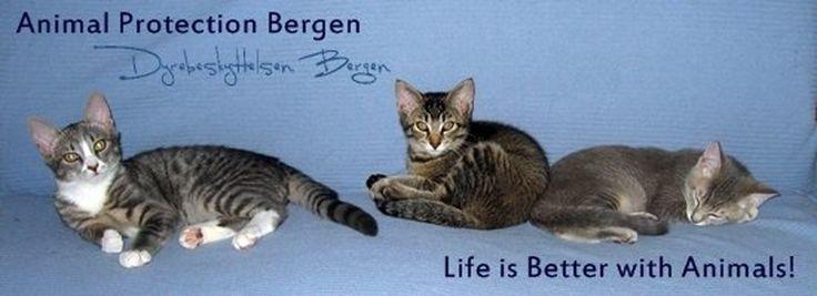 Dyrebeskyttelsen-Bergen Fundraiser