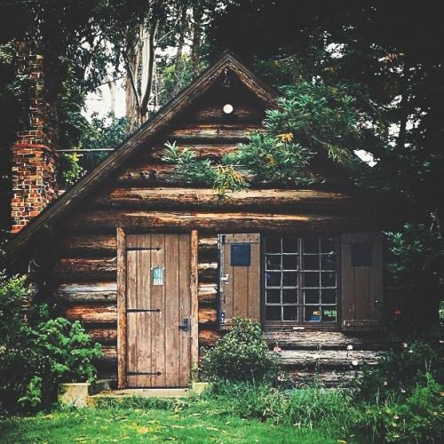 Cute little cabin in the woods the great outdoors for Cabin in the woods oregon