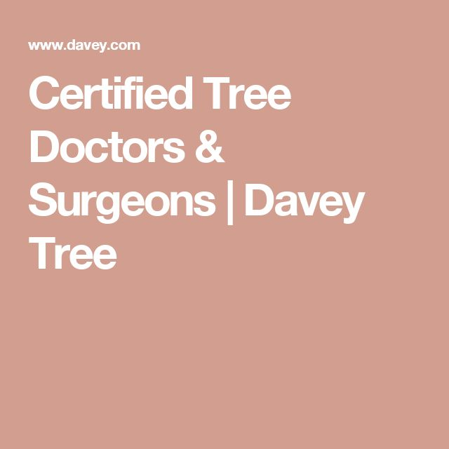 Certified Tree Doctors & Surgeons | Davey Tree