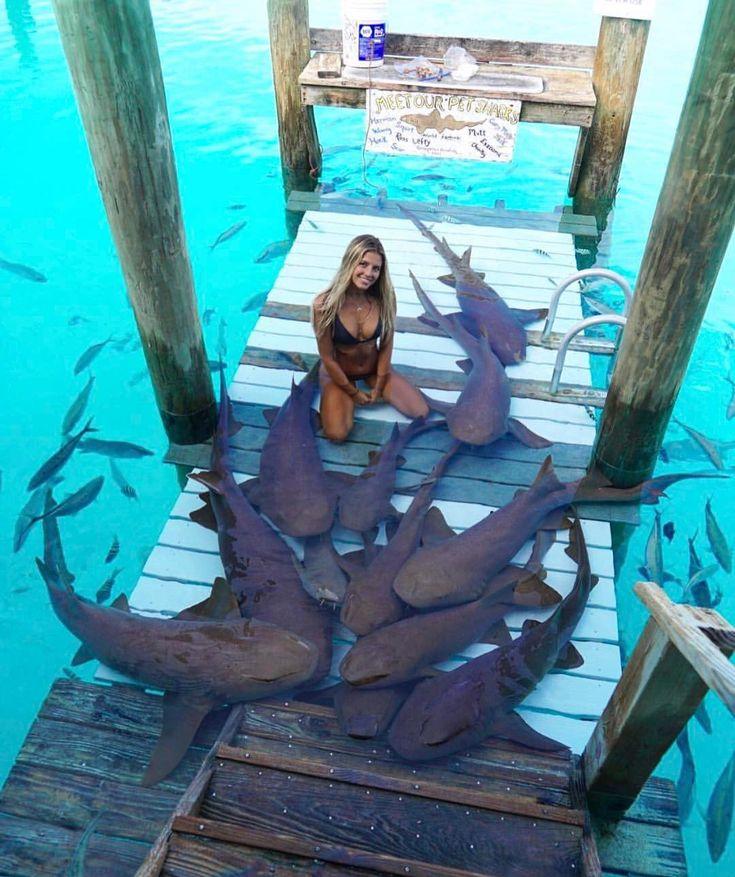compass cay marina, exumas Bahamas