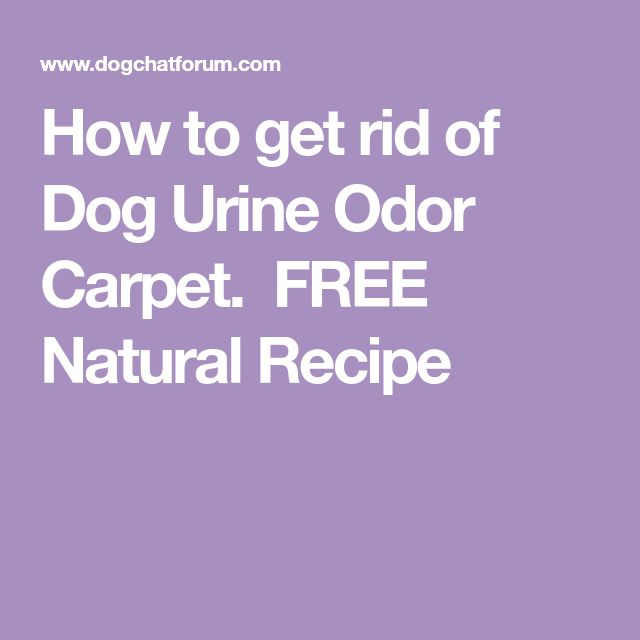25 Unique Dog Urine Remover Ideas On Pinterest Pet
