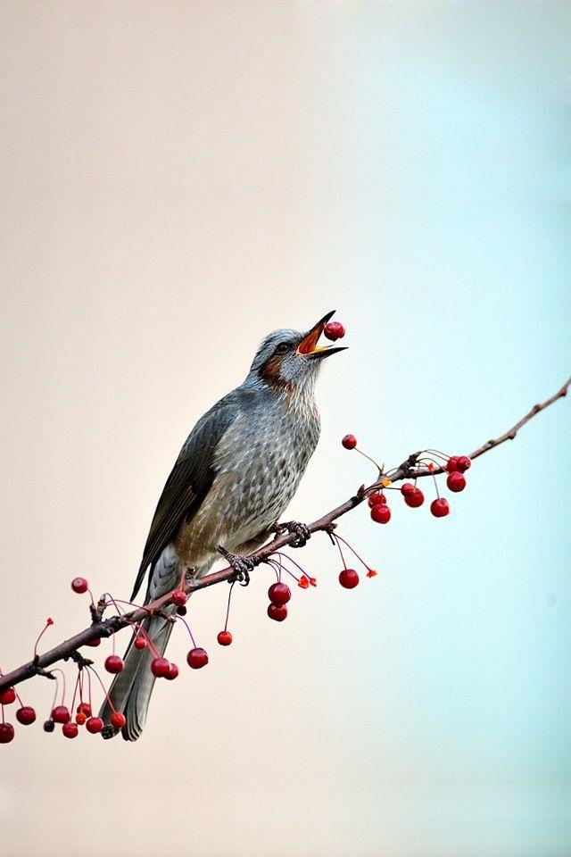 iPhone Wallpaper Bird Birds Pinterest