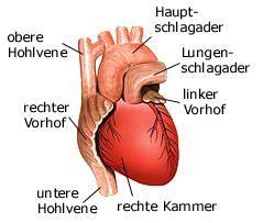 Herz Wean