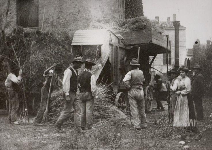 TREBBIATURA 1900