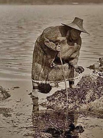 Historic Photo Of Kwakiutl Woman In Cedar Bark Cape Gathering Food At Low Tide