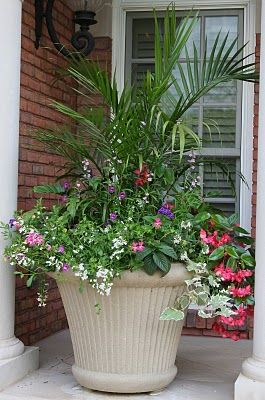 """Love the Palm in a container- this is a fantastic blog, written by a very """"real"""" relatable gardener!"""