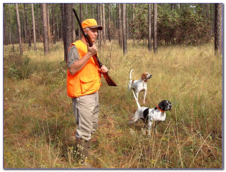 Hunter Safety COURSE TN ONLINE in 2020 Safety courses