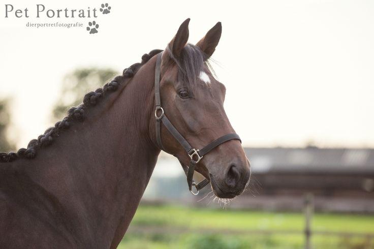 Paardenfotografie Lekkerkerk - Dier & Baasje fotoshoot paarden Miranda en Angel-10