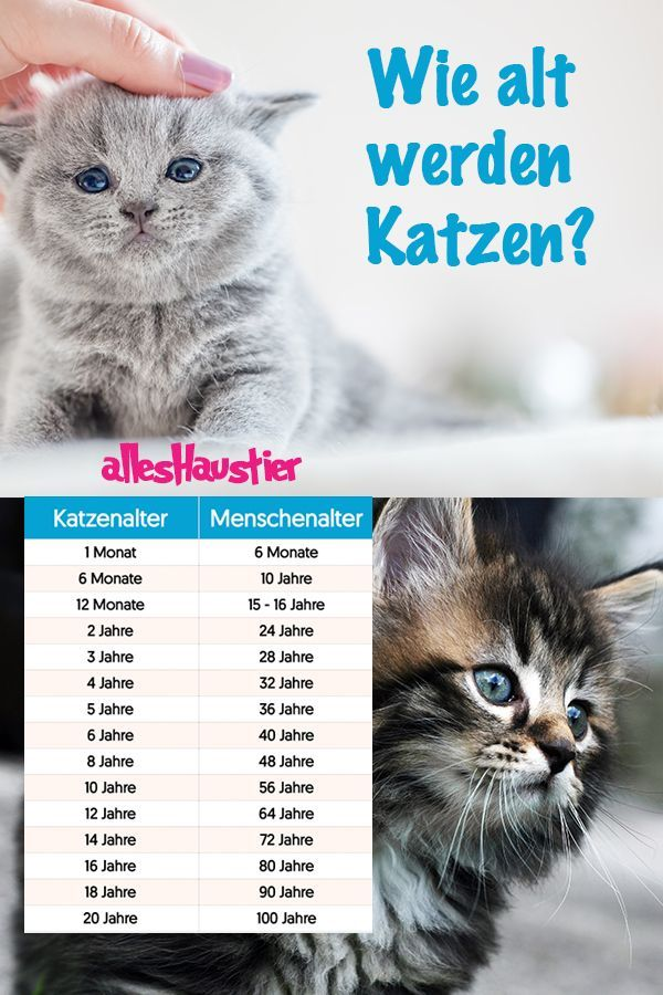 How old are cats? Facts and life expectancy in cats
