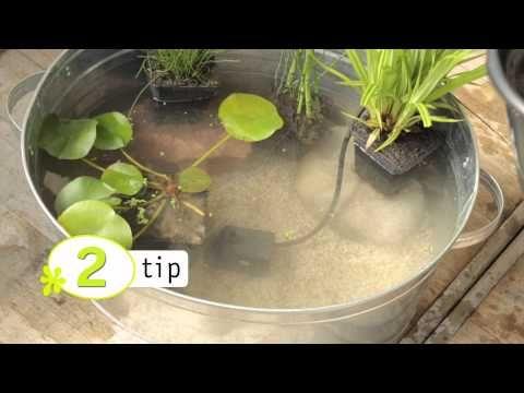 Mini vijver met waterplanten in huis - Hobby.blogo.nl