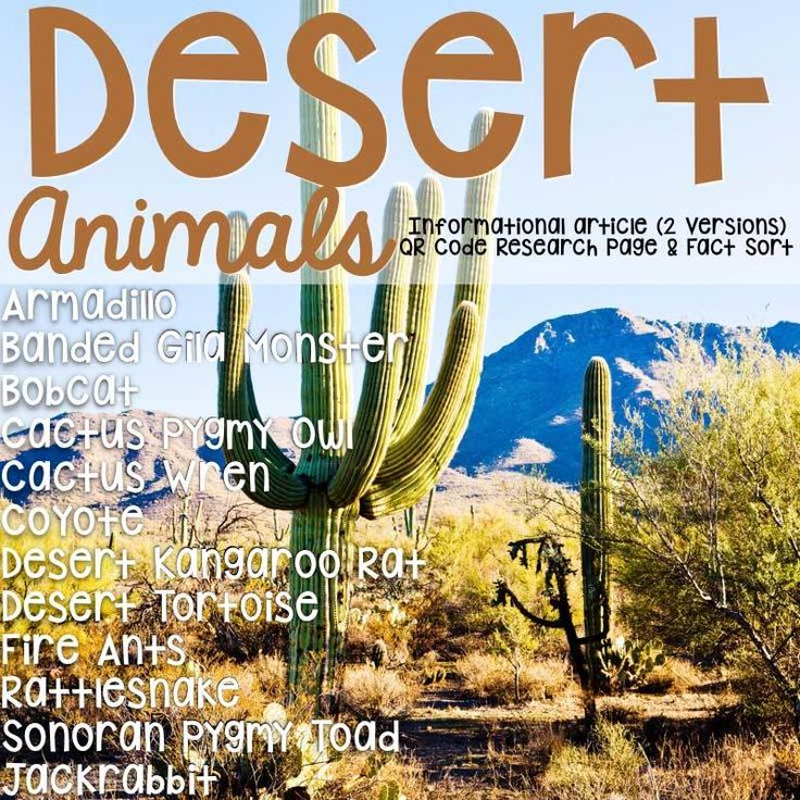 This product is a set of 12 informational articles about animals located in the North American Desert and includes an article about each animal in two formats (two-page color photos & one-page te