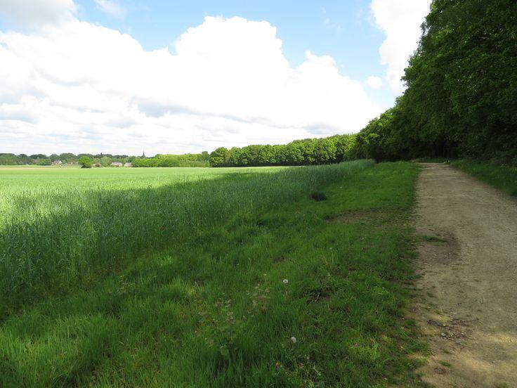 2014-05-03 Het eerste deel van de ronde wandeling vanaf 't Peeske loop je langs bos en korenvelden