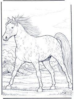 Desenhos para Colorir: cavalo