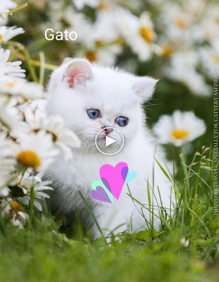 So Many Cute Kittens Videos Compilation 2020 Cats Cutekitty