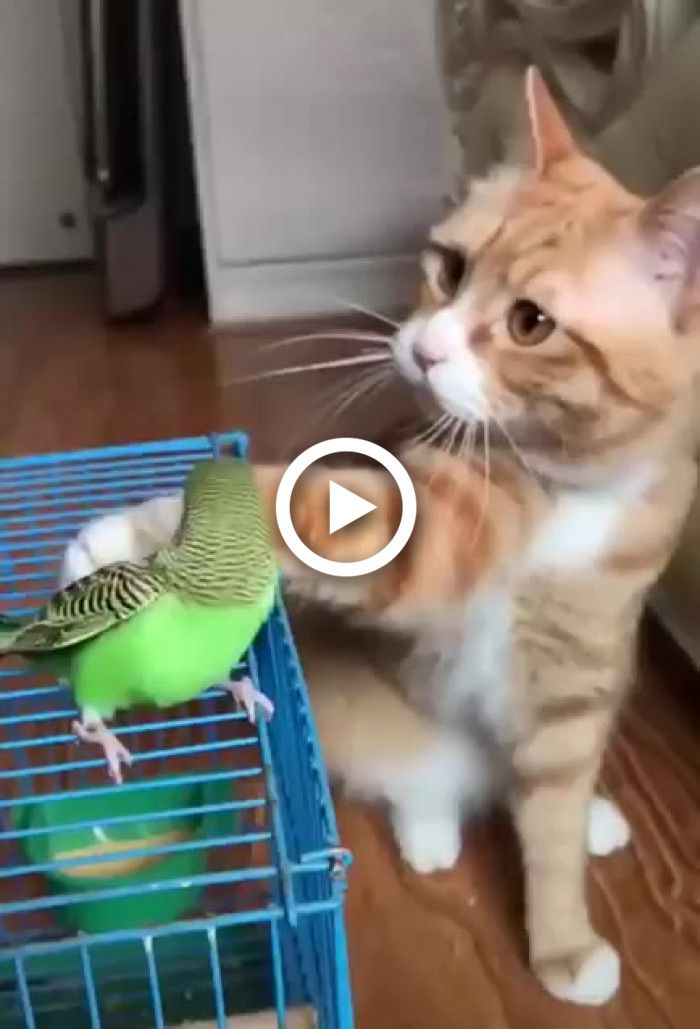 Cat is petting the bird