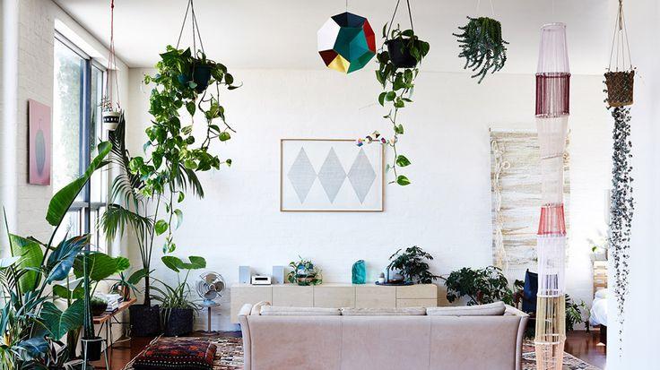 Maison végétalisée salon collection plantes d'intérieur