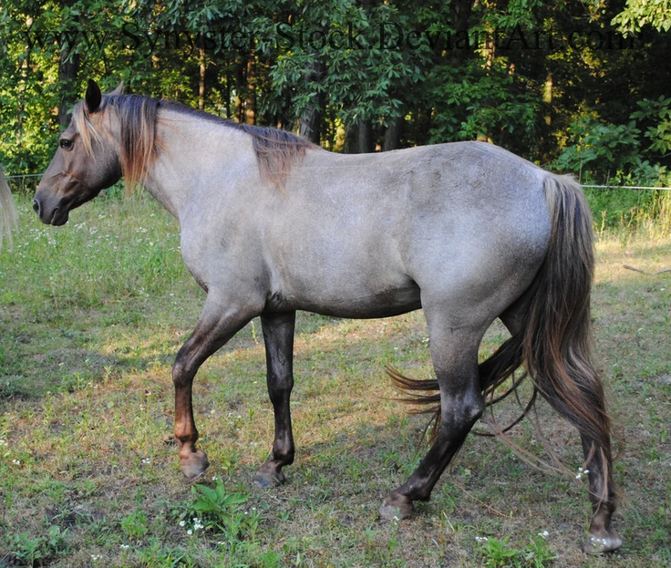 1000+ images about Chocolate roan horses on Pinterest ...