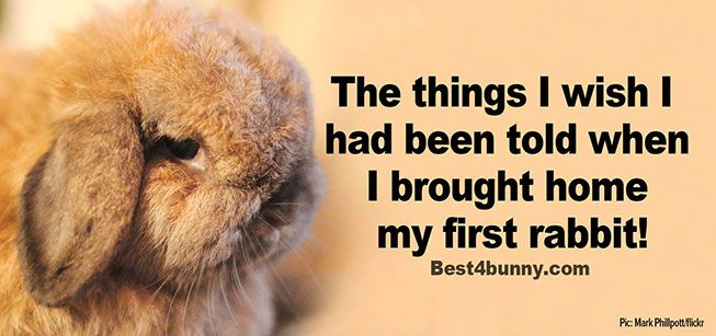 What rabbit owners wish they had been told about rabbits, before they brought their first bunny home. Read what they say here... http://best4bunny.com/things-wish-told-brought-home-first-…/