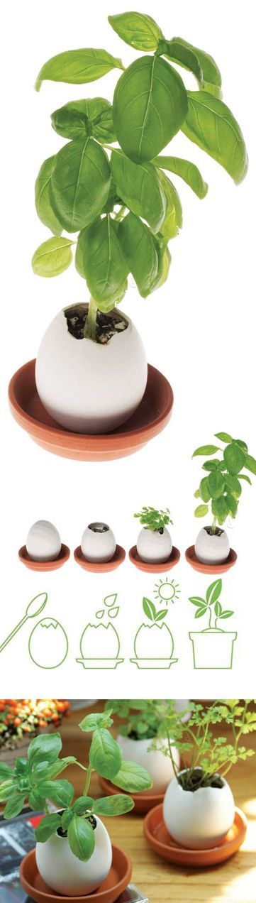 Eggling mini herb pot // simply crack the top of the oversized egg, add water, and discover a garden ready to grow! This one grows basil.