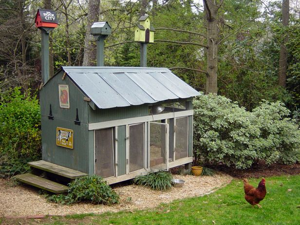 The owners of this tin roof chicken coop wanted to create a home for their chickens and guest houses for visiting bluebirds.
