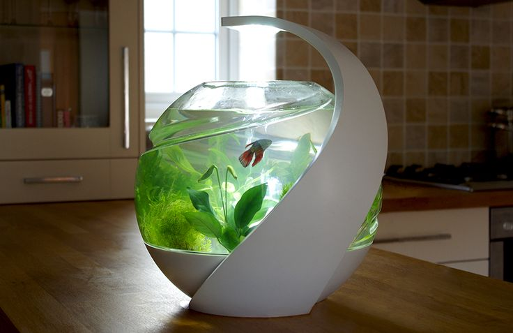 Self-cleaning fish tank.