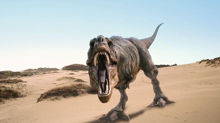 Real Dinosaur Pictures Tyrannosaurus Rex | Tyrannosaurus Rex HD Wallpaper Wallpaper